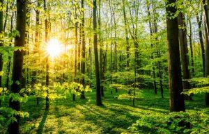 Was ist eigentlich ein Klimawald?