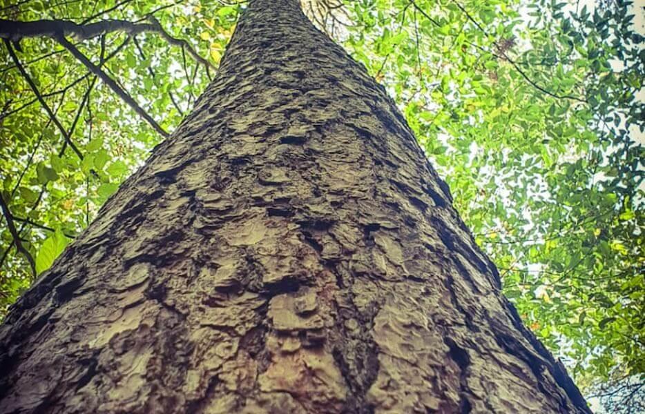 Lebenszyklus von Bäumen