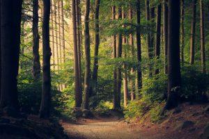 Wald gegen Klimawandel: Warum wir Bäume pflanzen müssen
